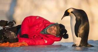 Putování tuřňáků