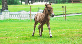 Nejmenší koně na světě najdete v parku Boheminium